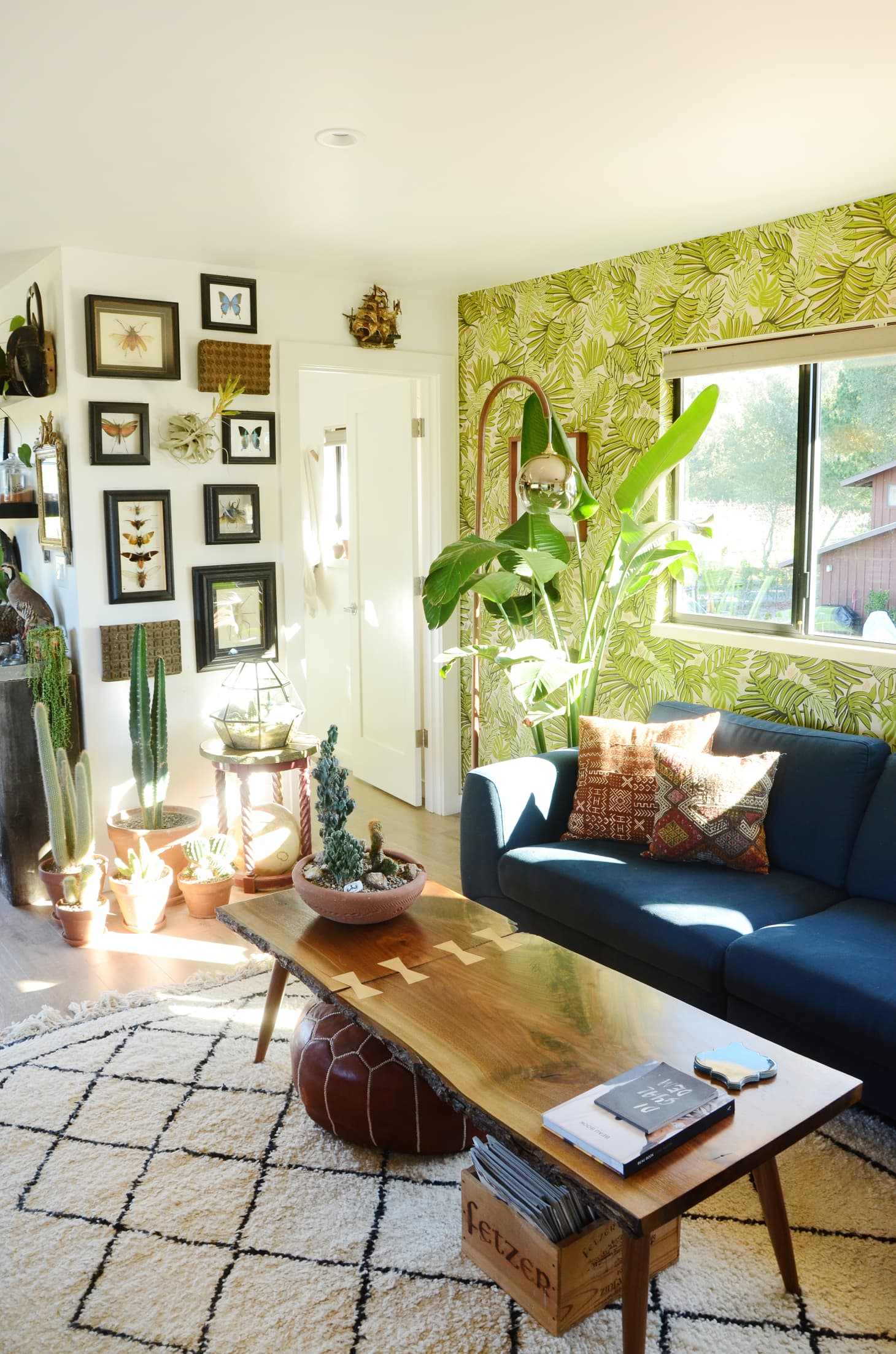 Bird of Paradise Plant Care | Apartment Therapy