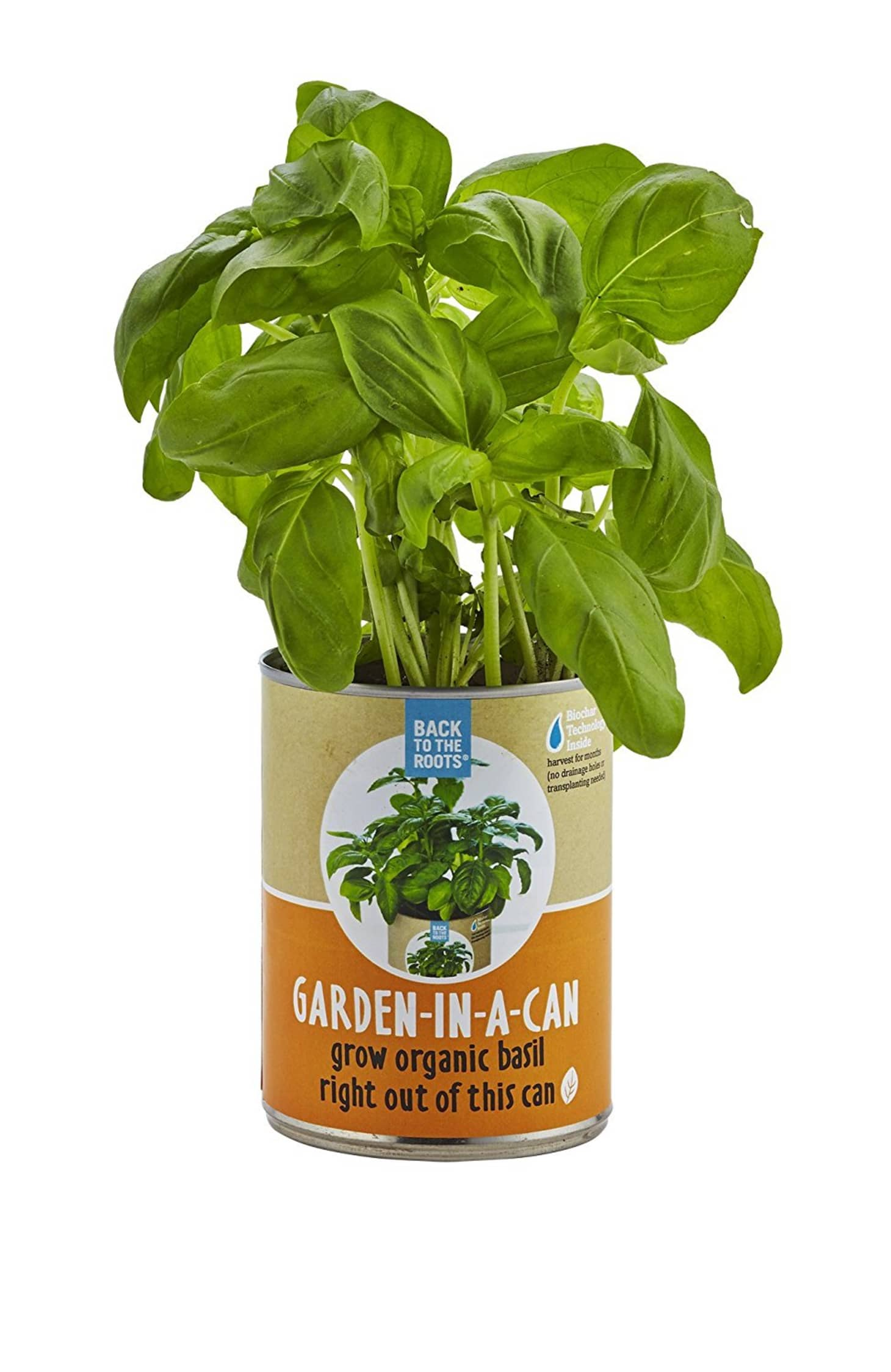 How to Grow Basil   Apartment Therapy