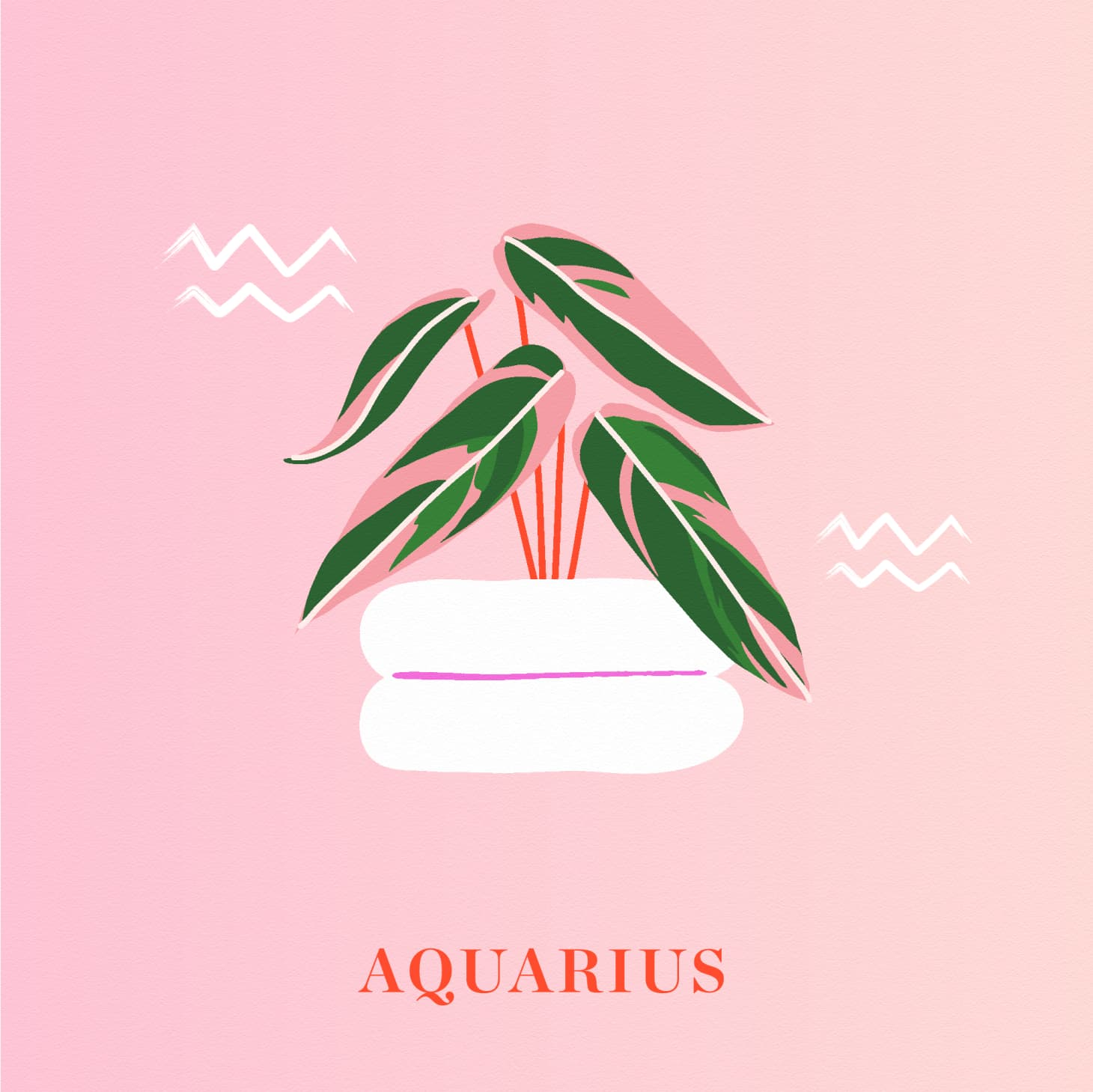 The Best Houseplant for Your Zodiac Sign | Apartment Therapy