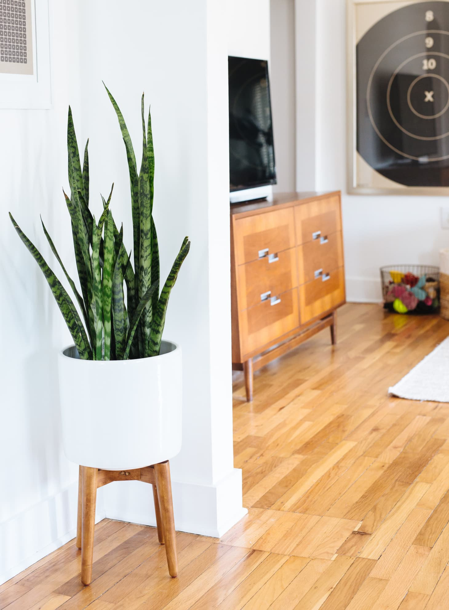 Best Living Room Plants   Apartment Therapy