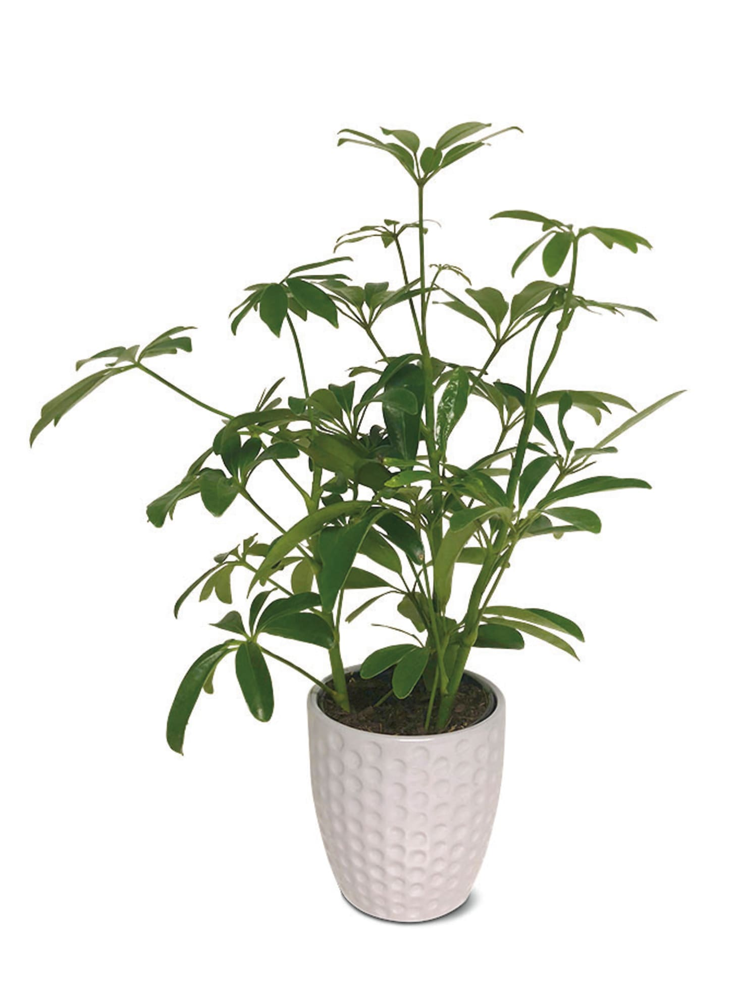Aldi Potted Plants Deal | Apartment Therapy