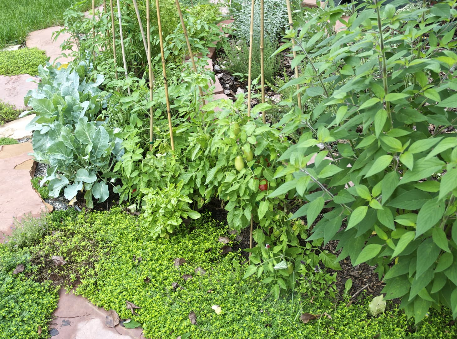 Companion Planting 101: Putting Your Garden to Work for You | Kitchn