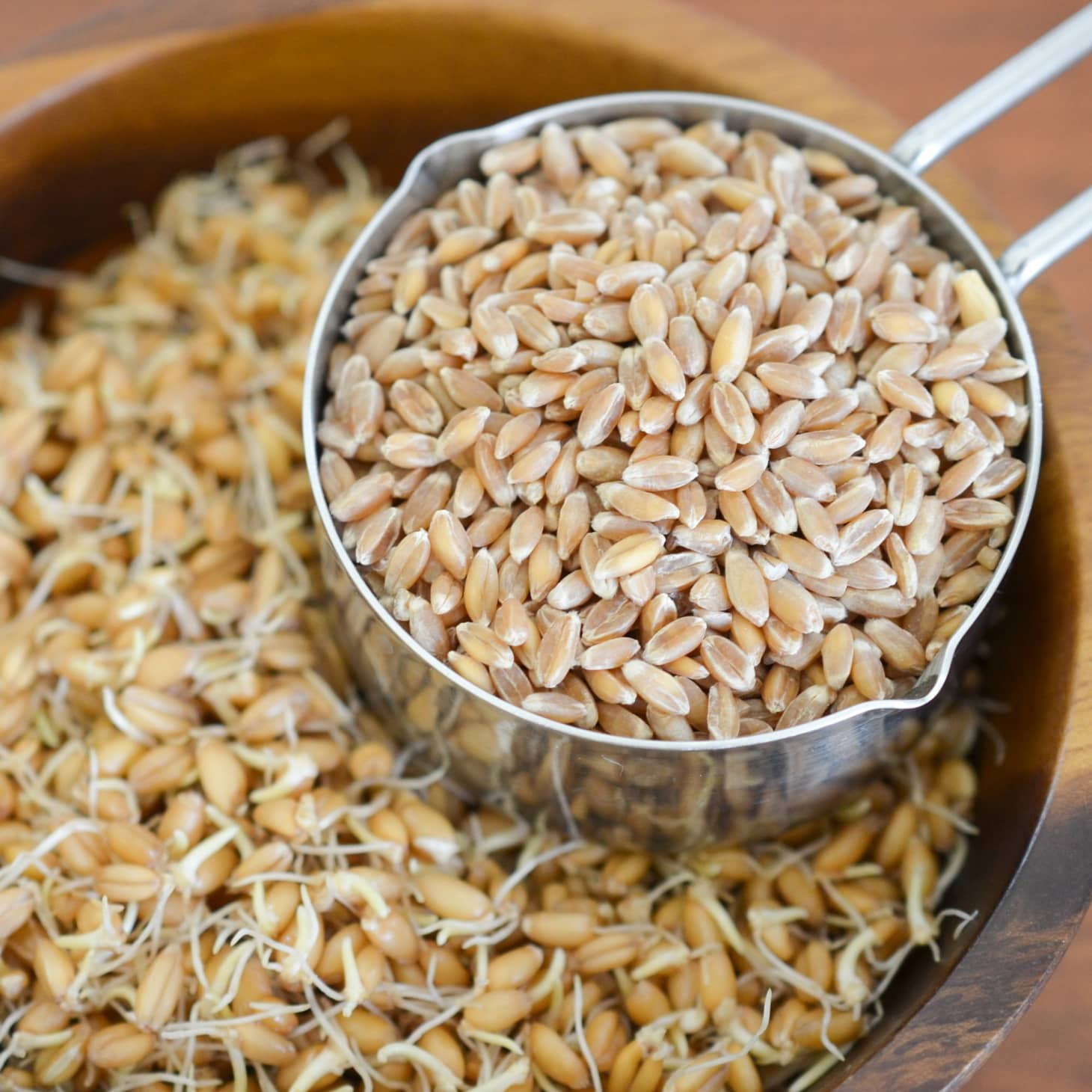 How To Make Sprouted Grains