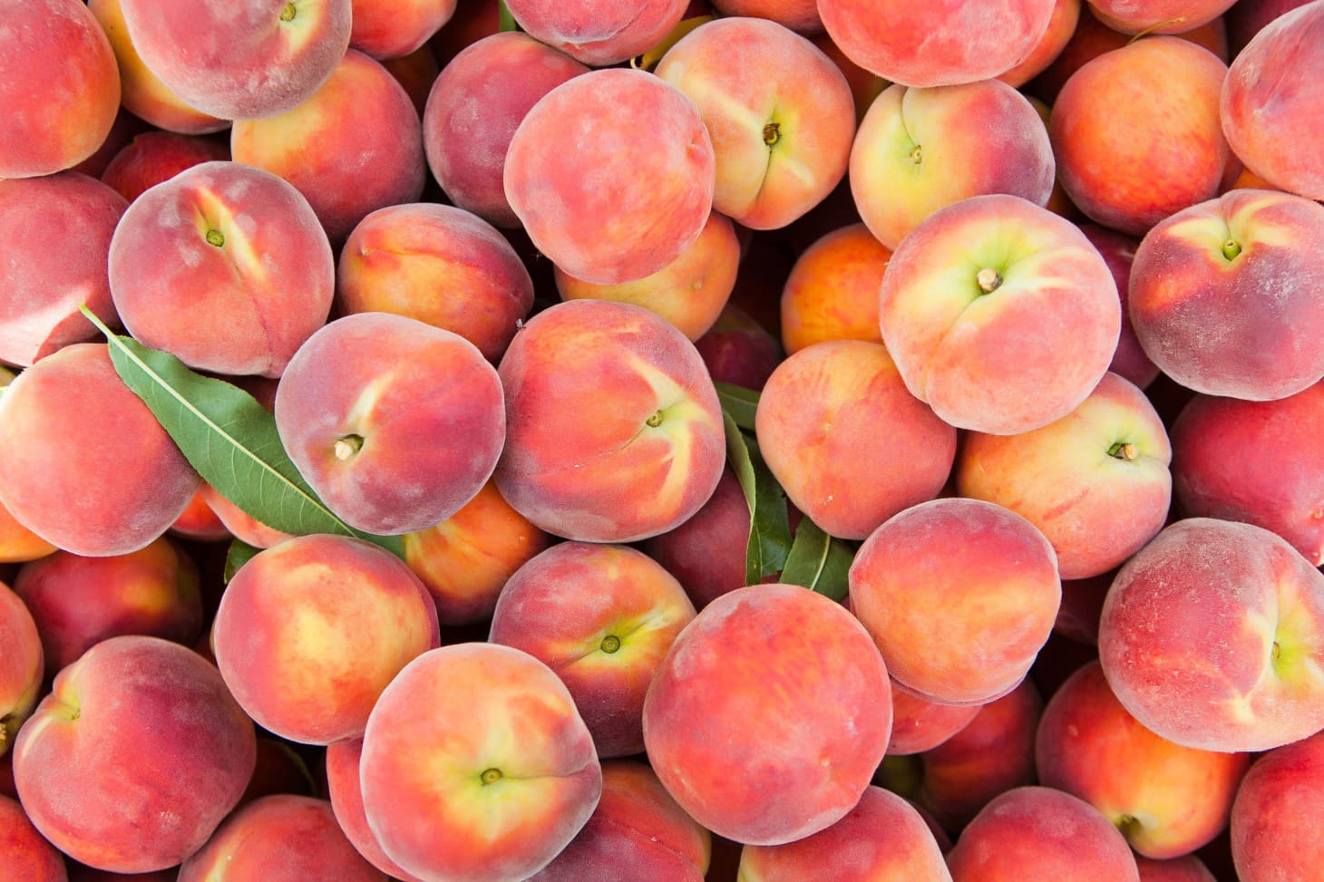 Auto Credit Post Falls >> What's the Difference Between Peaches and Nectarines? | Kitchn