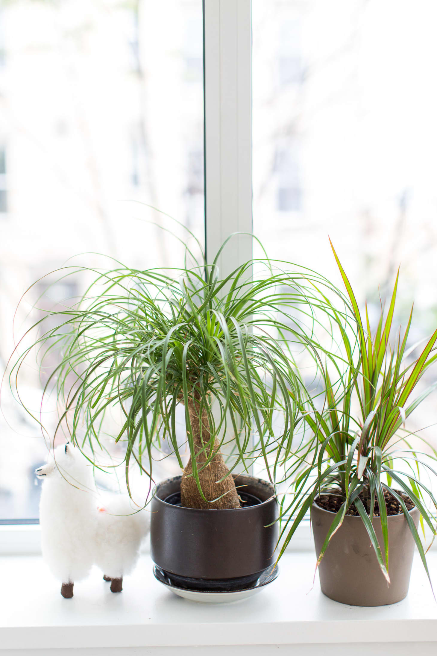 House Plants Low Maintenance Watering | Kitchn