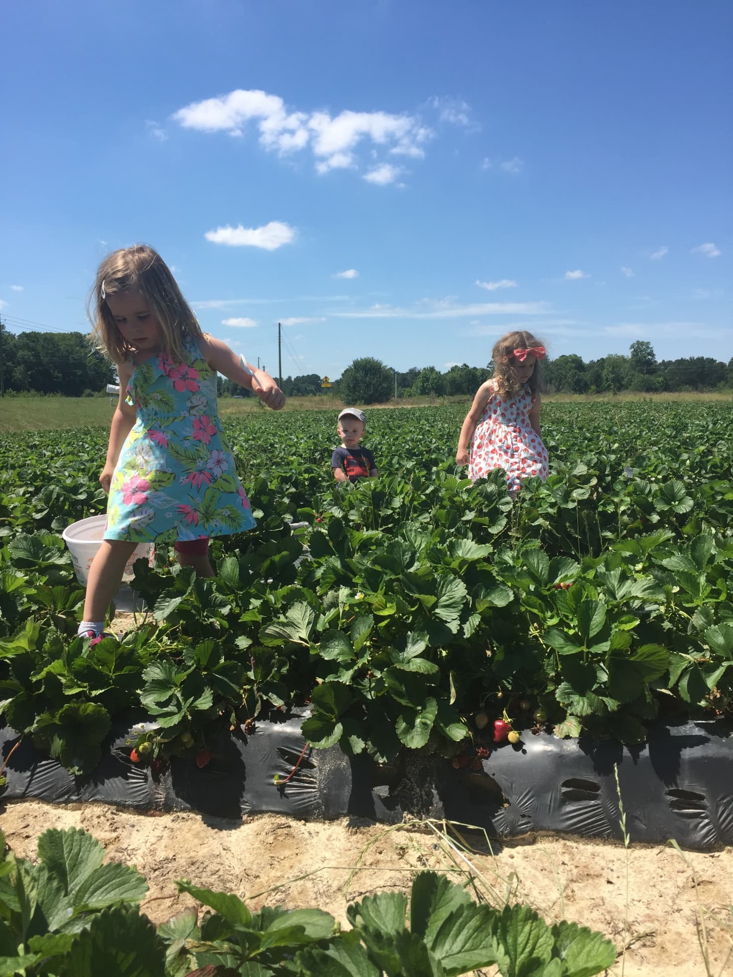 A Guide to Strawberry Picking with Kids This Season | Kitchn