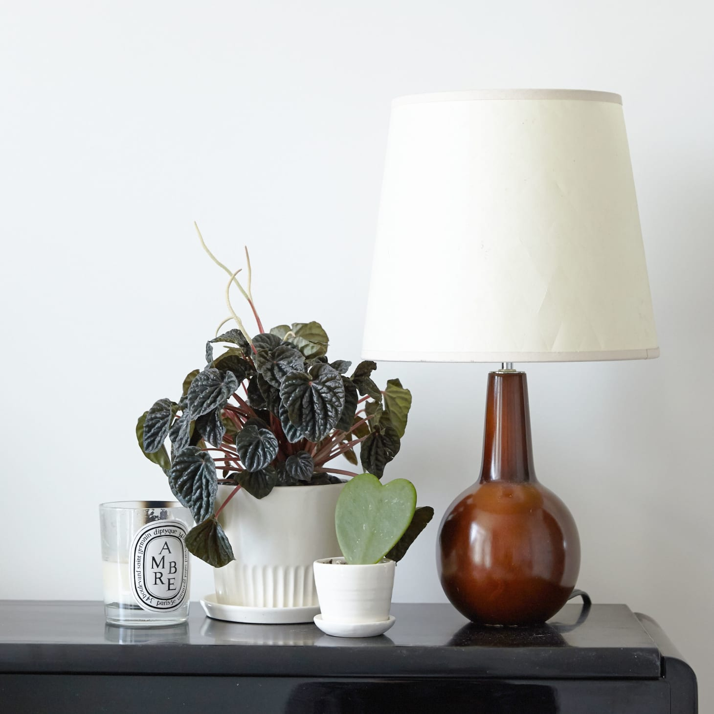 8 Houseplants That Can Survive Urban Apartments, Low Light