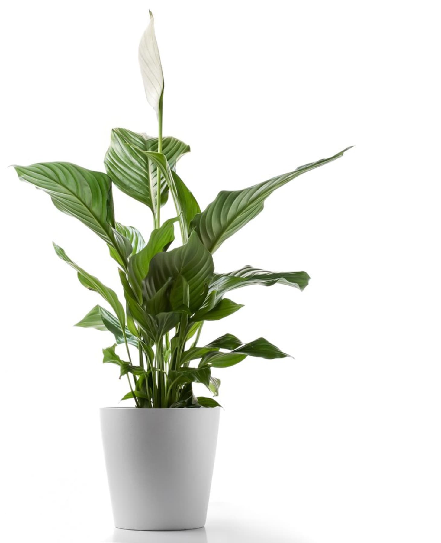 Best Low Light Plants For Bedroom: 5 Hard-to-Kill Houseplants For Apartments With Low Light