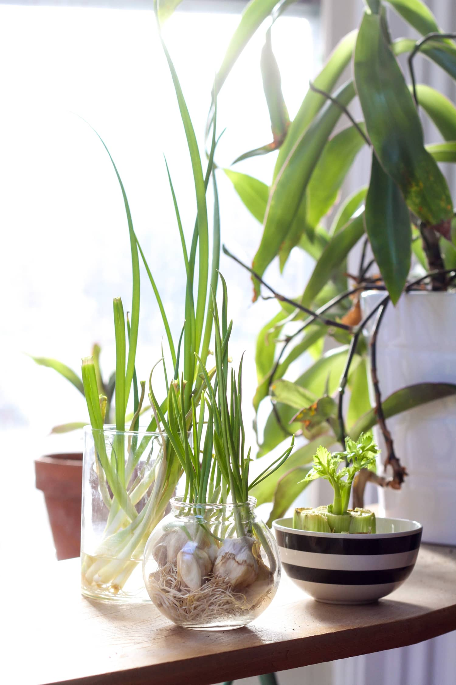 Extend Your Gardening Season: Veggies & Herbs You Can Grow Indoors During the Winter Months