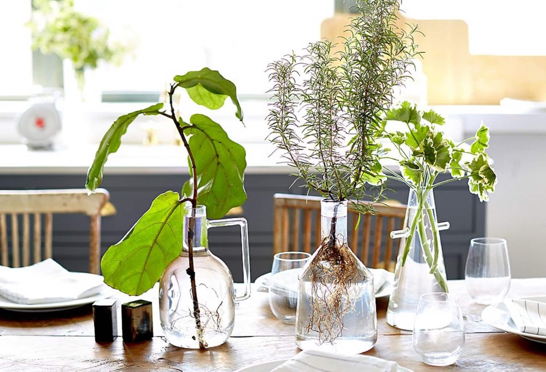 The No-Soil, Zero-Maintenance Method for Growing Houseplants