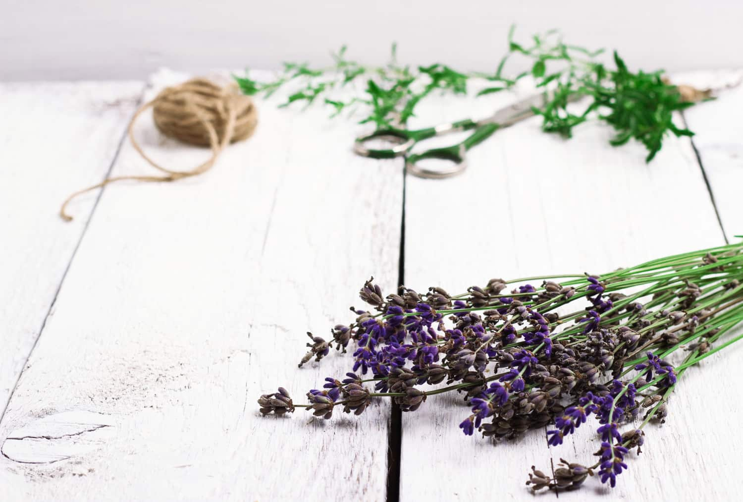 Why You Should Be Planting Lavender Right Now