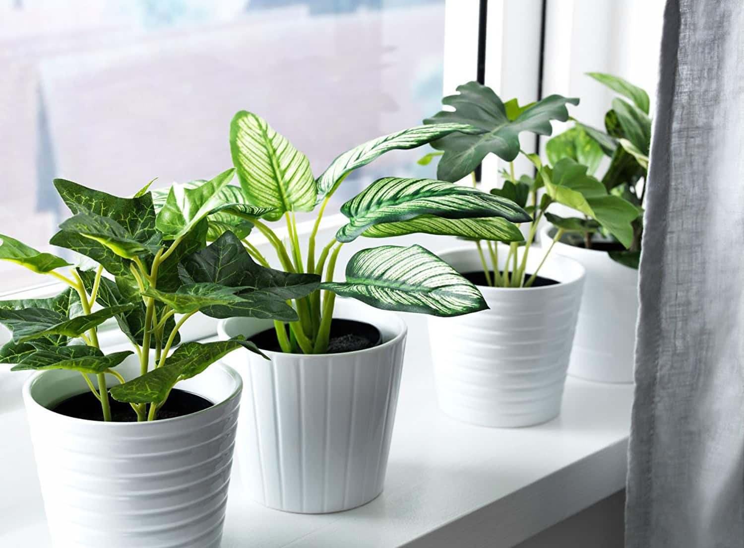 a very real guide to buying very fake plants apartment therapy. Black Bedroom Furniture Sets. Home Design Ideas