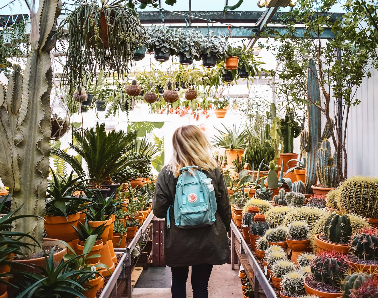 This Author & Plant Store Pro Has 6 Tips for Buying Plants You Won't Kill