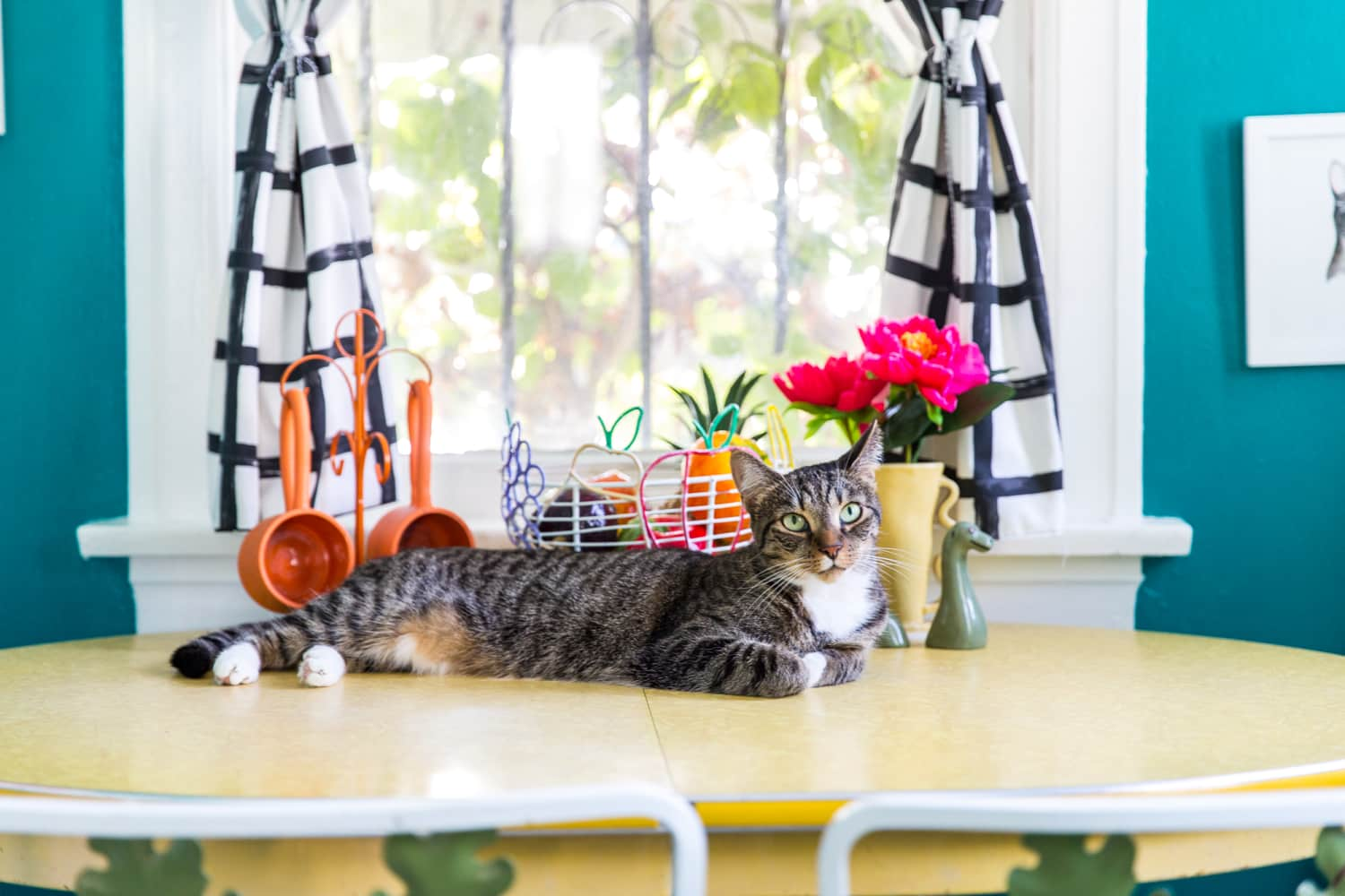 cat whisperer jackson galaxy s advice for keeping your cats off the counter kitchn. Black Bedroom Furniture Sets. Home Design Ideas