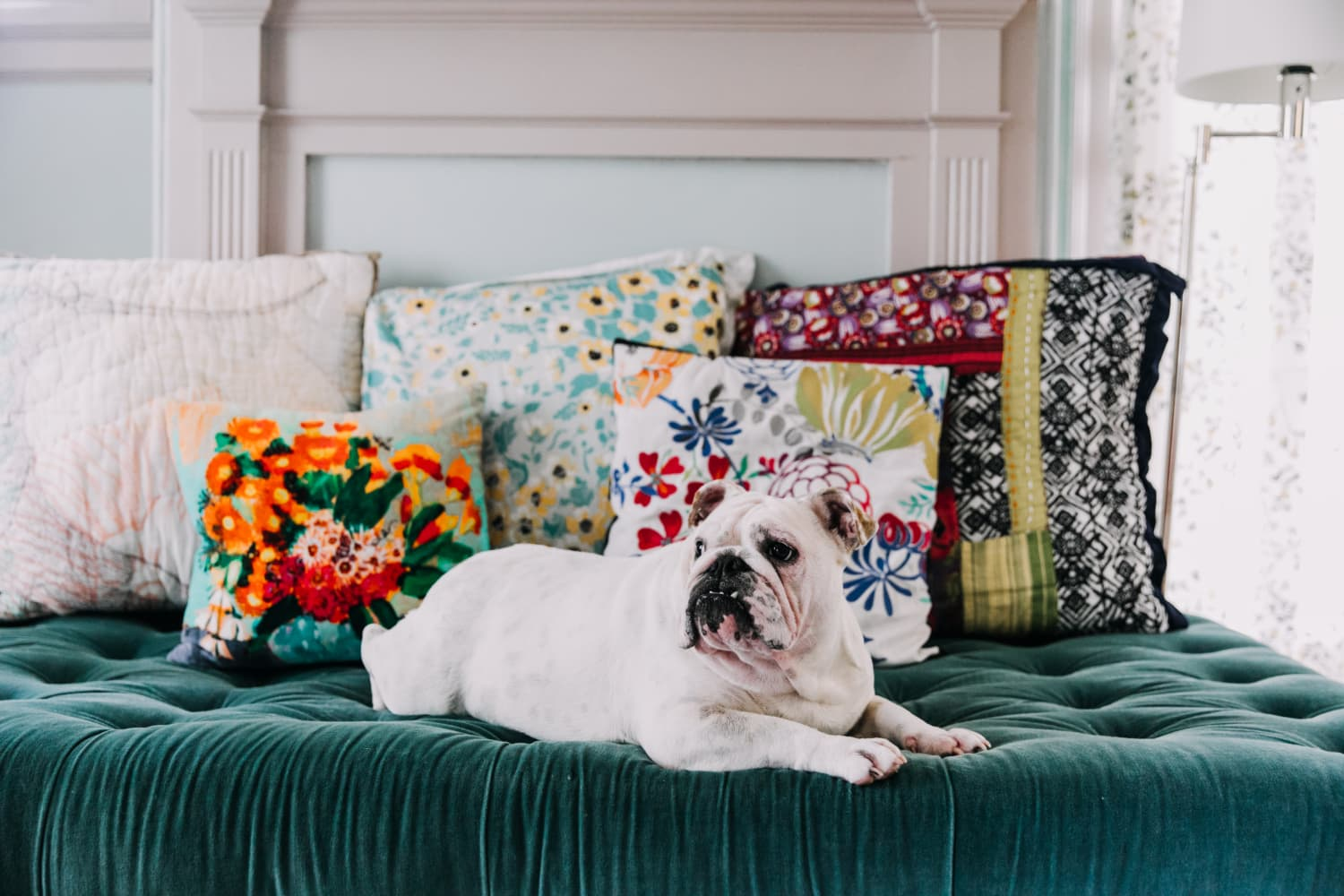 This Pup Parent Built a 'Dog Boudoir' For His Rescue and the Results Are Adorable