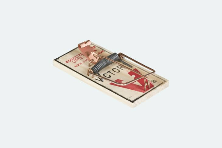 产品图片:Victor原装鼠夹16包
