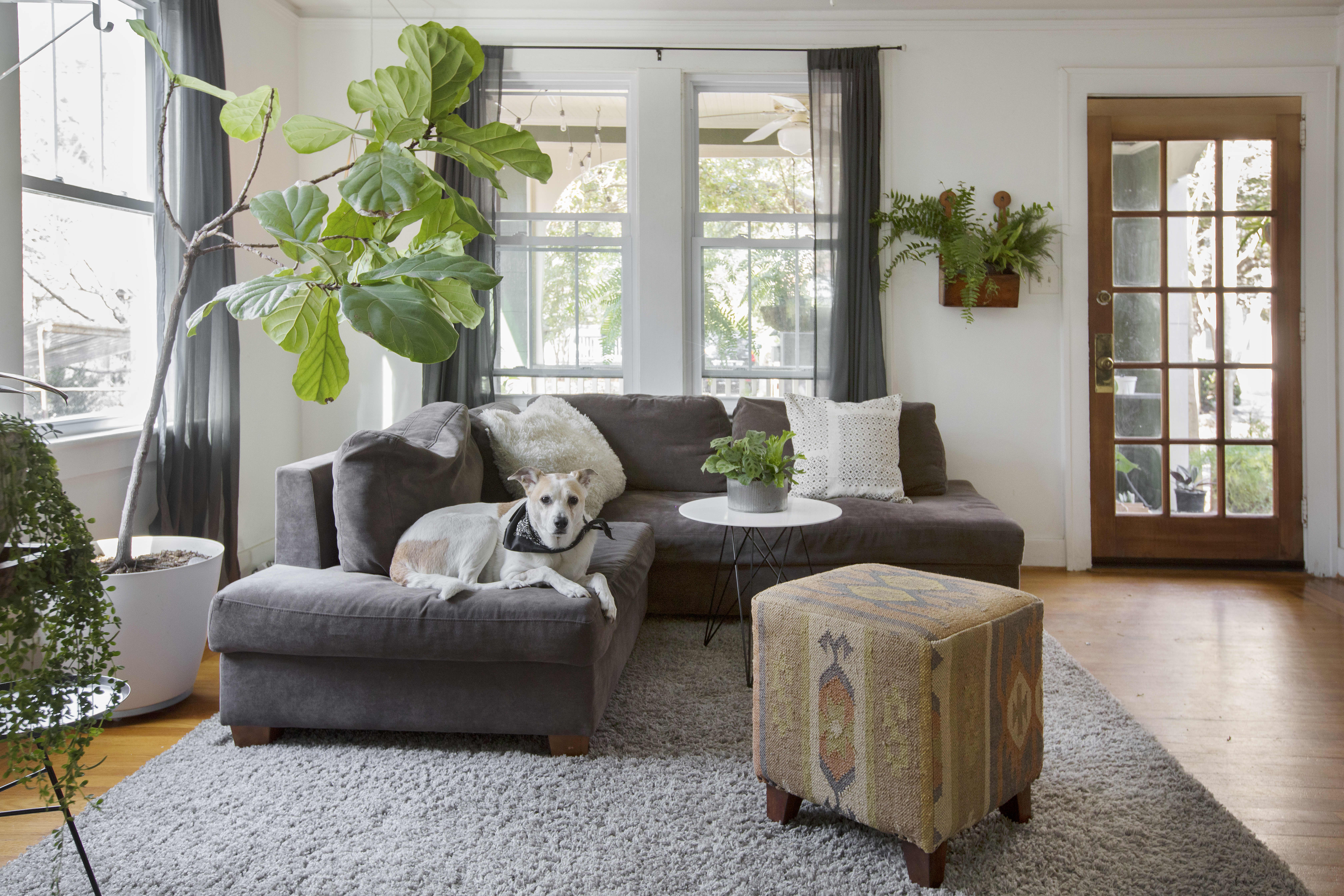 Hægur Owner's Plant-Filled Charleston Home | Apartment Therapy