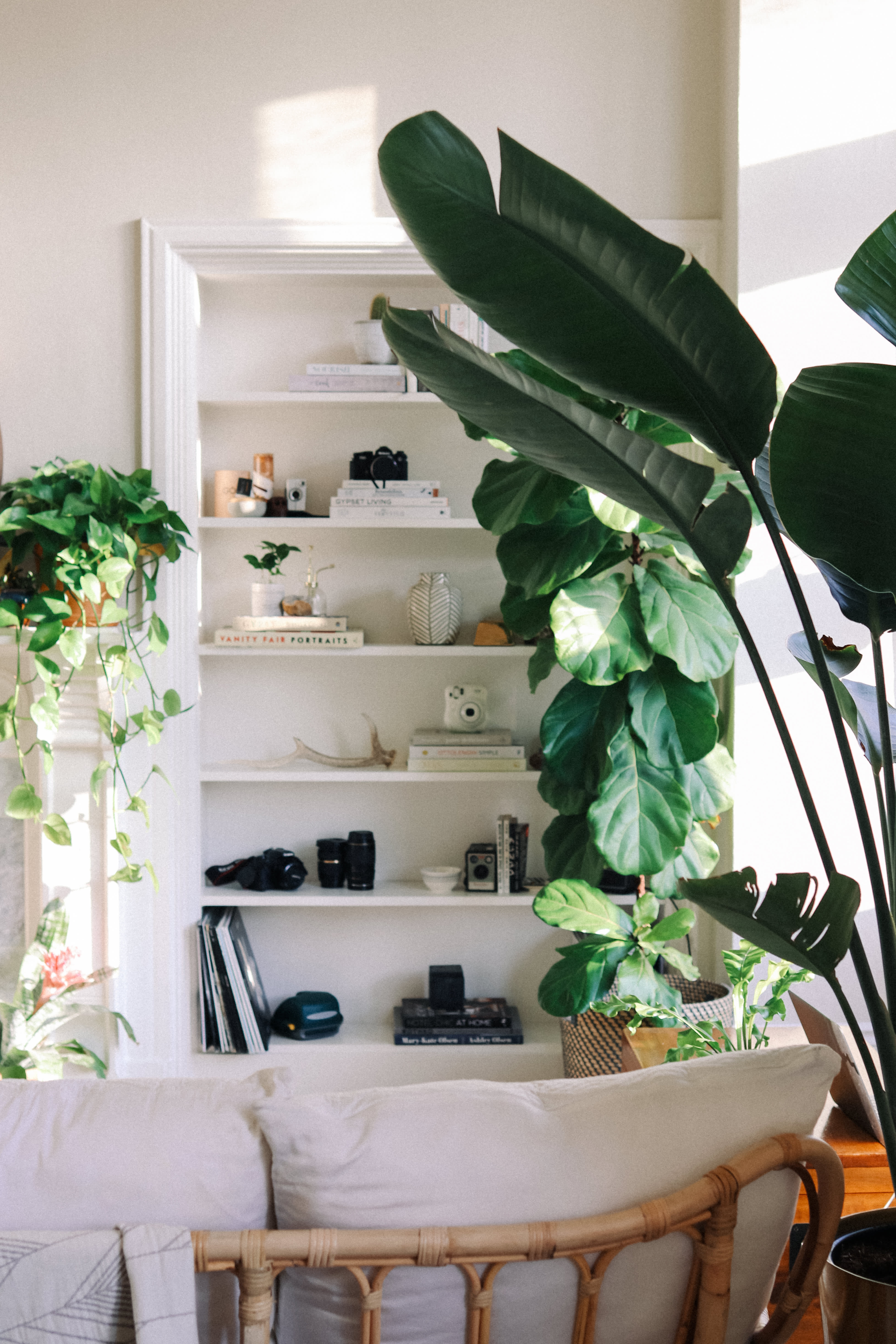 Plant Filled Simple Chic Studio Apartment Decor Photos ... on bathroom filled with plants, bedroom filled with plants, house full of plants, house books,