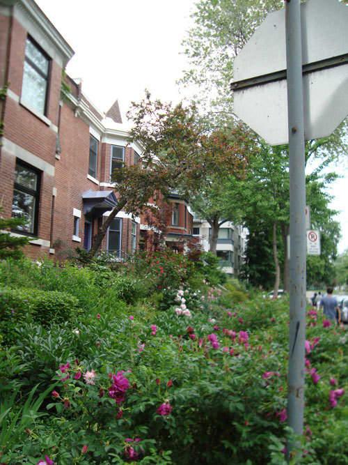 Look! A Multi-Yard Flower Garden: gallery slide thumbnail 1