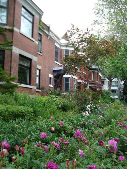 Look! A Multi-Yard Flower Garden: gallery slide thumbnail 5