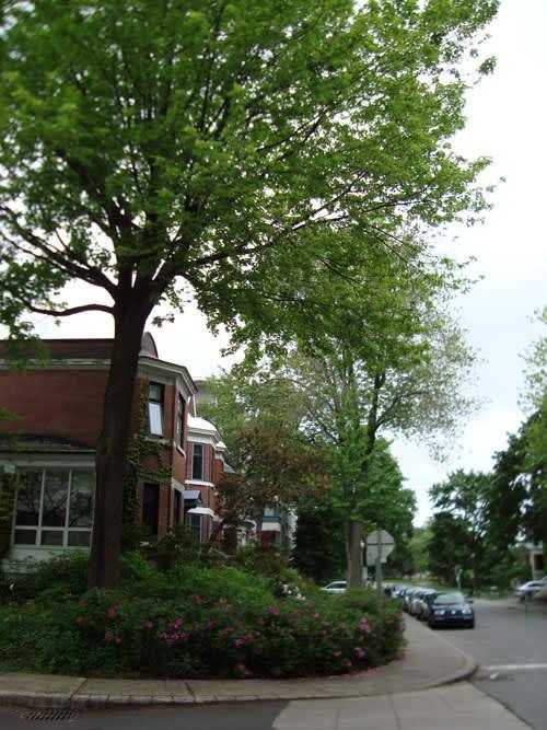 Look! A Multi-Yard Flower Garden: gallery slide thumbnail 2