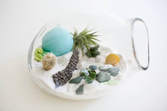 Dainty by Design: Terrariums by Lítill: gallery slide thumbnail 5