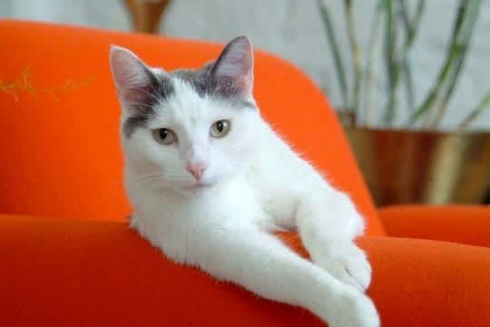 Pets On Modern Furniture: gallery slide thumbnail 2