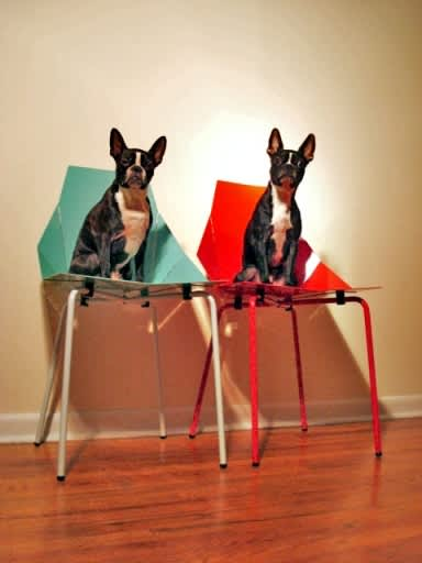 Pets On Modern Furniture: gallery slide thumbnail 5