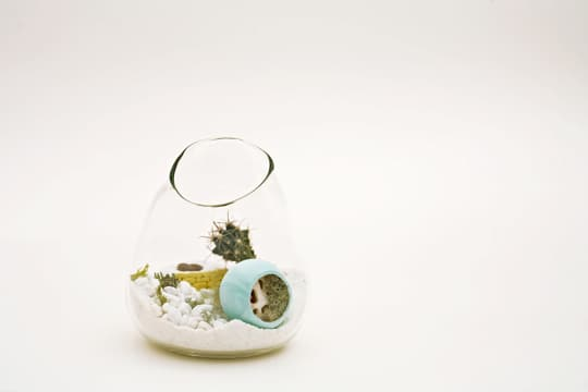 Dainty by Design: Terrariums by Lítill: gallery slide thumbnail 1
