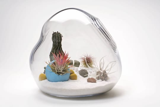 Dainty by Design: Terrariums by Lítill: gallery slide thumbnail 4