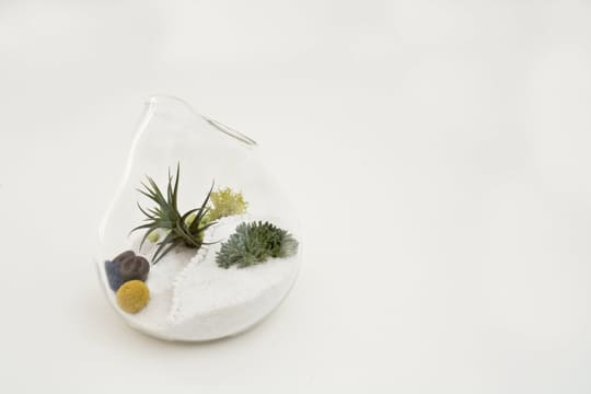 Dainty by Design: Terrariums by Lítill: gallery slide thumbnail 3
