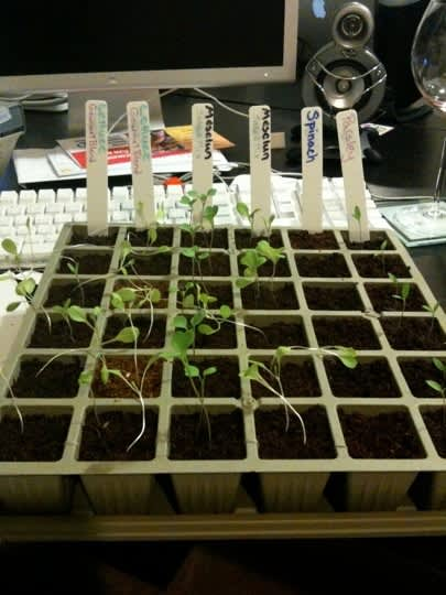 From Seed to Garden: Claire & Aman's Raised Bed, Part 1: gallery slide thumbnail 9