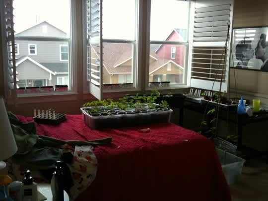 From Seed to Garden: Claire & Aman's Raised Bed, Part 1: gallery slide thumbnail 10