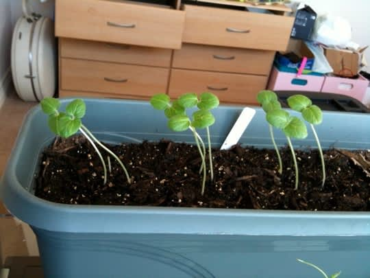 From Seed to Garden: Claire & Aman's Raised Bed, Part 1: gallery slide thumbnail 7