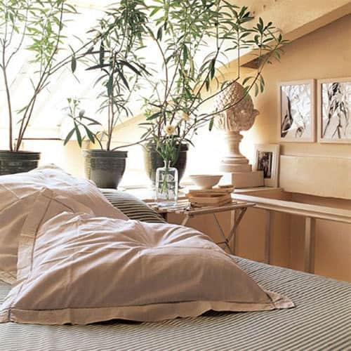 Inspiration: Bringing Bigger Plants Indoors: gallery slide thumbnail 7