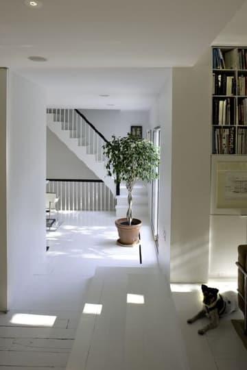 Inspiration: Bringing Bigger Plants Indoors: gallery slide thumbnail 6