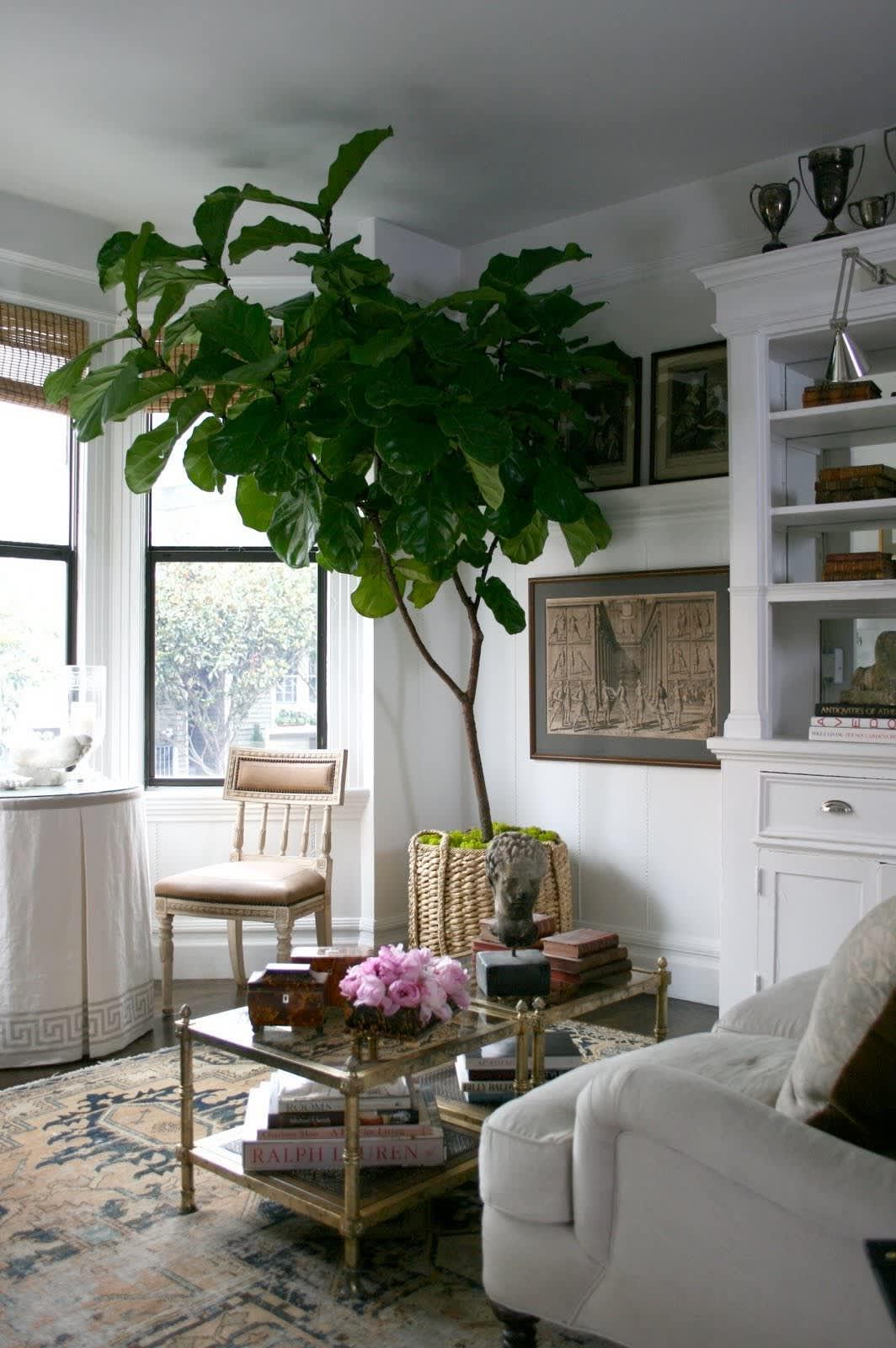 Inspiration: Bringing Bigger Plants Indoors: gallery slide thumbnail 2