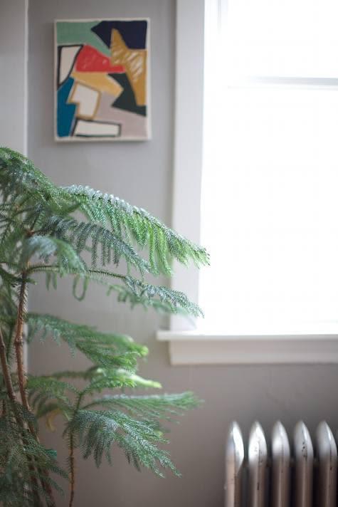 Inspiration: Bringing Bigger Plants Indoors: gallery slide thumbnail 9