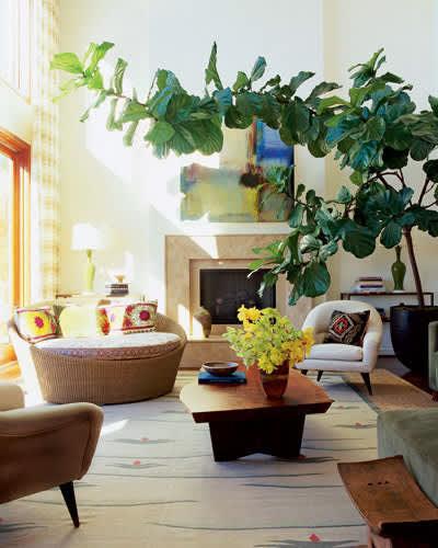 Inspiration: Bringing Bigger Plants Indoors: gallery slide thumbnail 1