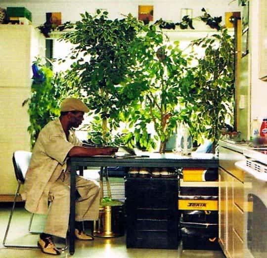 Inspiration: Bringing Bigger Plants Indoors: gallery slide thumbnail 3