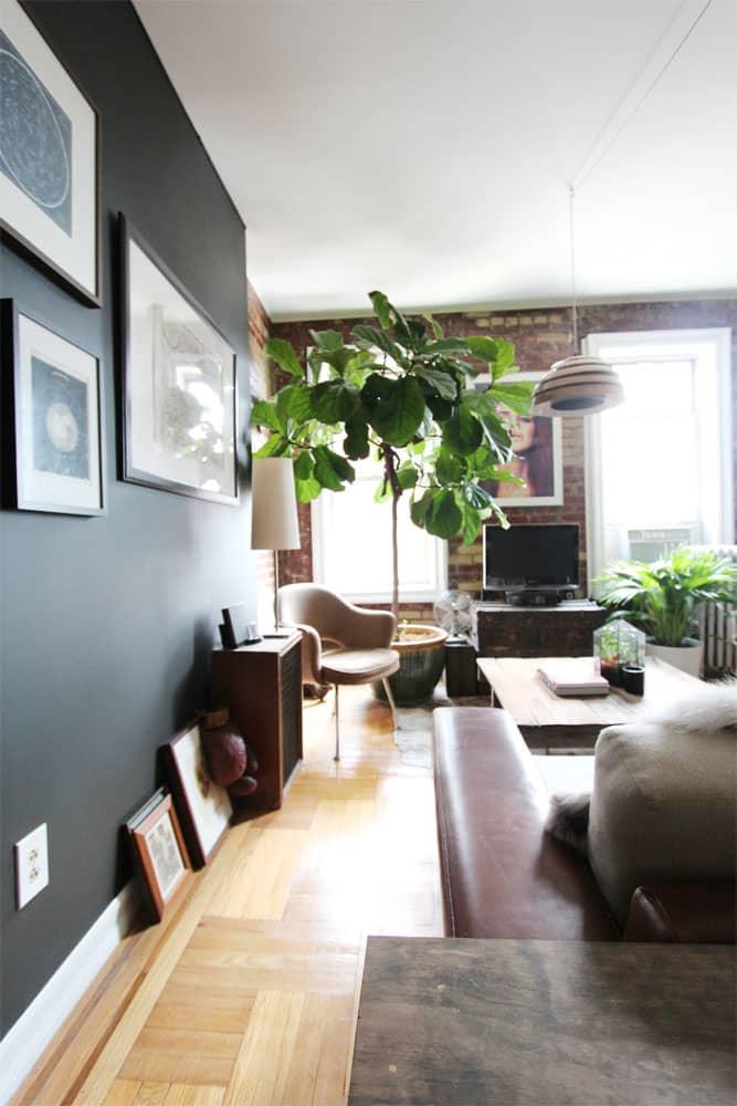 living room plant fiddle leaf fig tree
