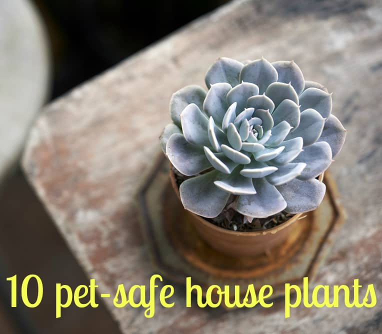 Keeping Your Pets Safe 10 Non Toxic House Plants Apartment Therapy