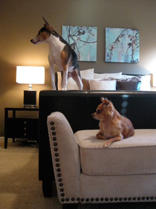 Steve & Jeremy's Contemporary Comfy Chic: gallery slide thumbnail 14