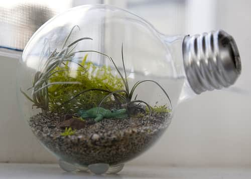 Creative Reuse: 10 Ways To Repurpose Light Bulbs: gallery slide thumbnail 8