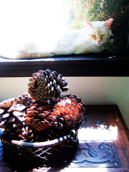 Melissa and Stephen's Preserved Spanish Revival: gallery slide thumbnail 7