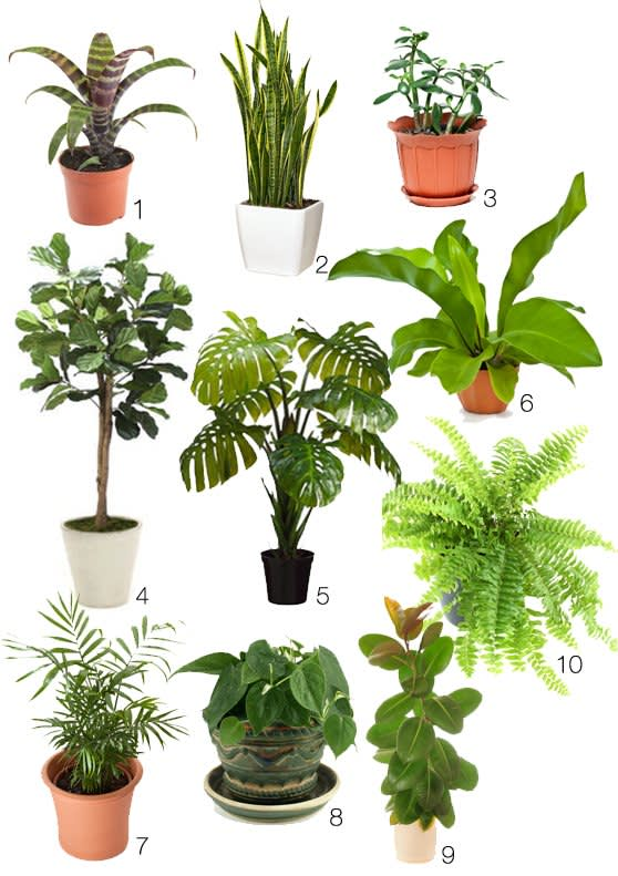 great, lush indoor plants for a 70s style