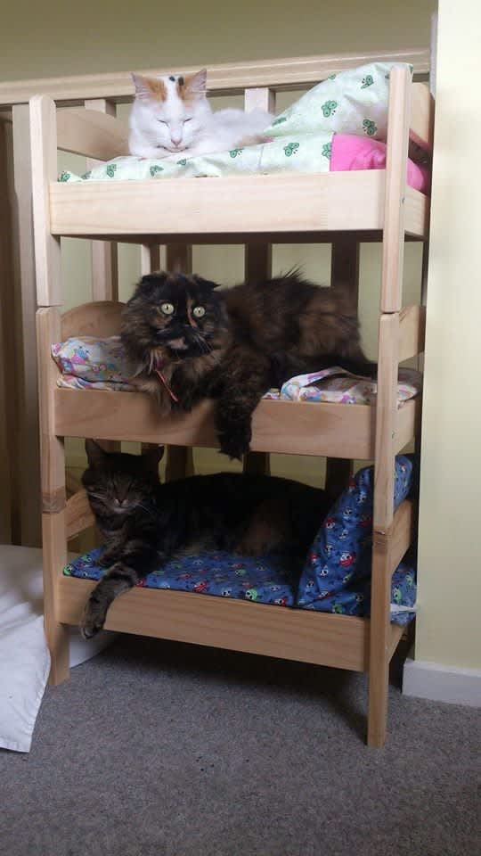 7 IKEA Hacks Your Cats Will Love   Apartment Therapy