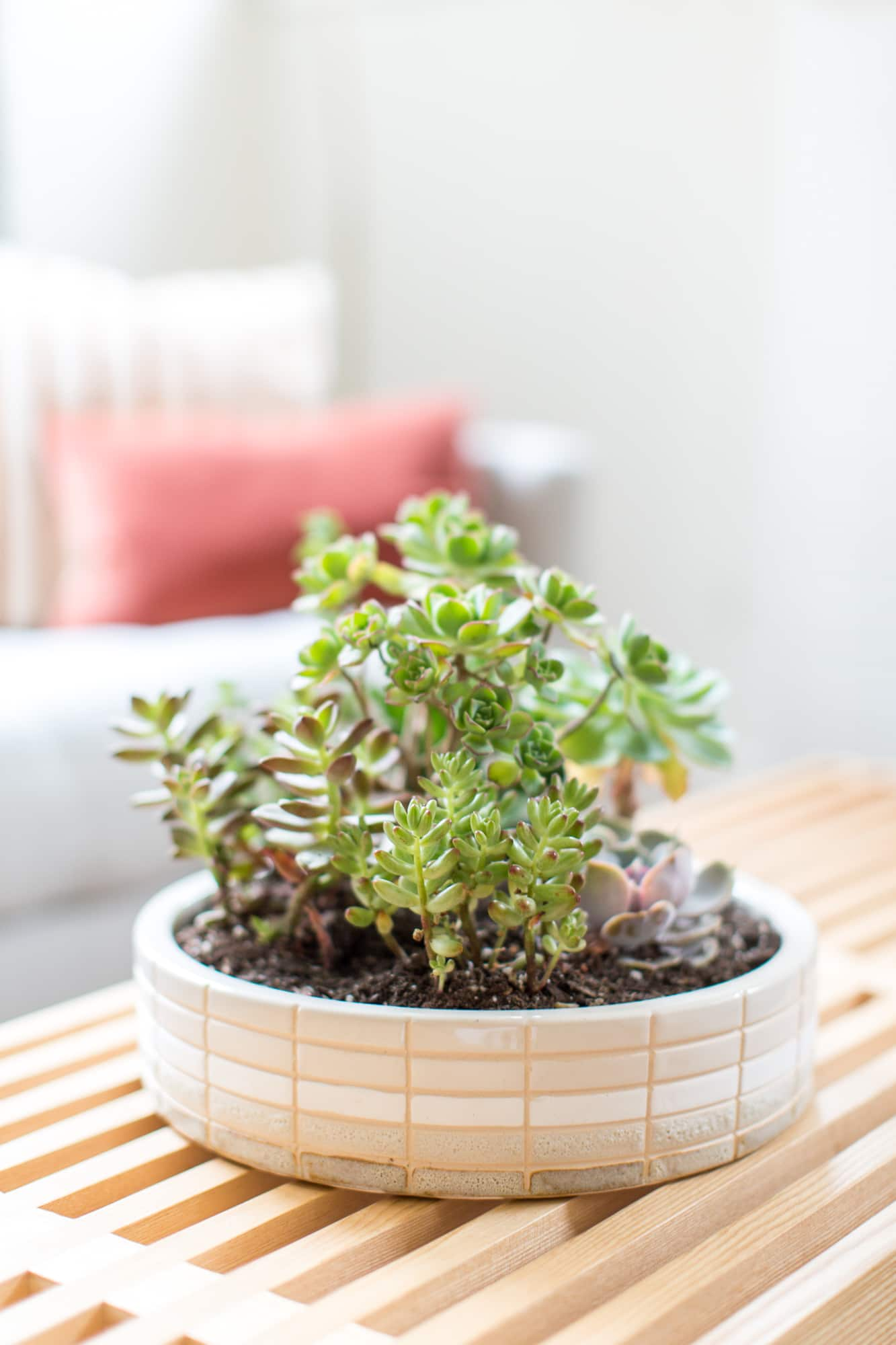 foolproof ways to keep your succulents alive and thriving apartment therapy. Black Bedroom Furniture Sets. Home Design Ideas
