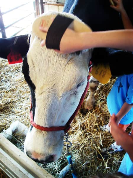 Where Does Milk Come From? A Tour of Shatto Dairy in Kansas City: gallery image 25