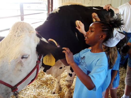 Where Does Milk Come From? A Tour of Shatto Dairy in Kansas City: gallery image 22